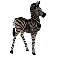 Free Zebra Foal for DAZ Zebra by chriscox